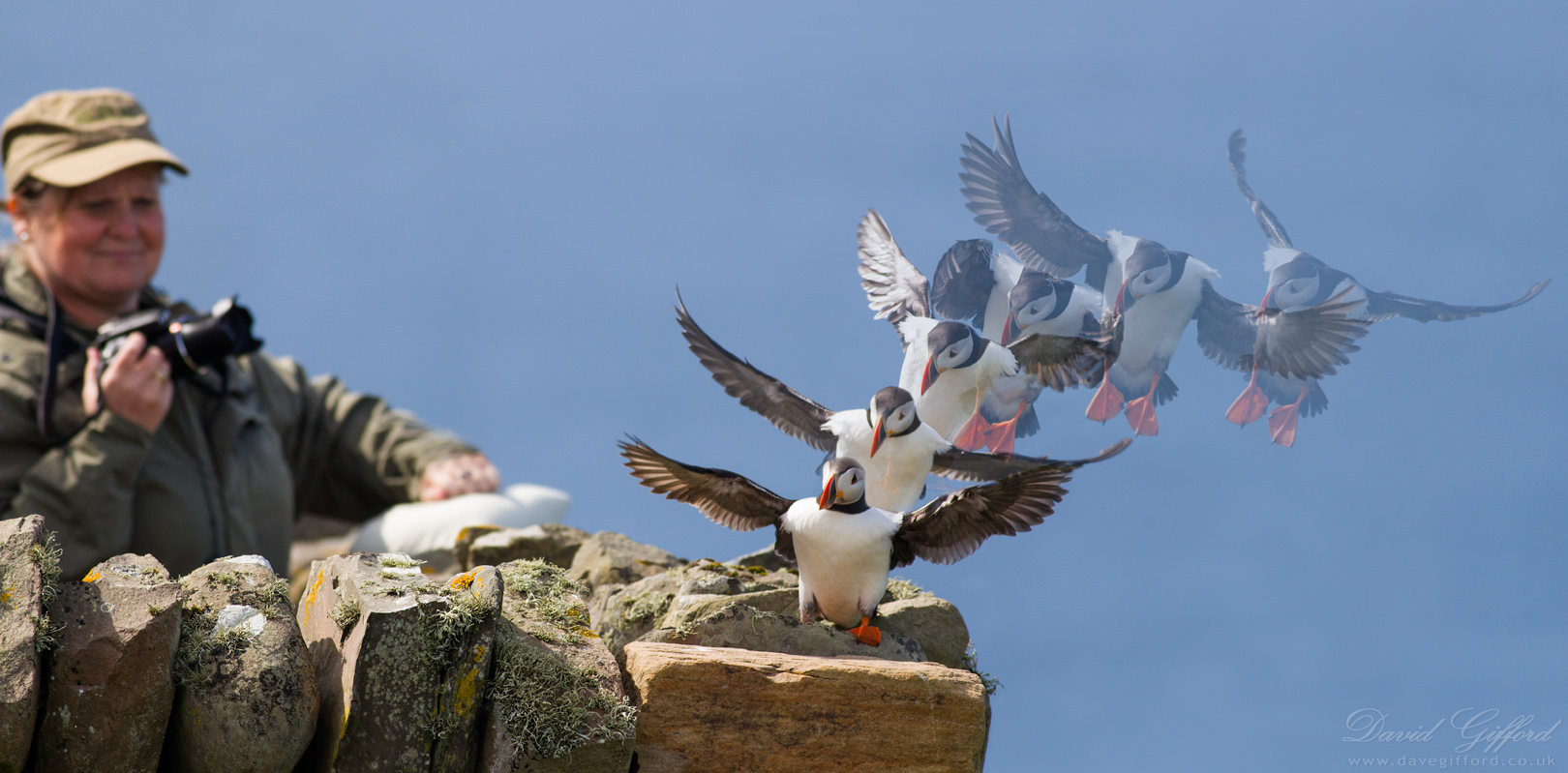 Puffin Photo Opportunity