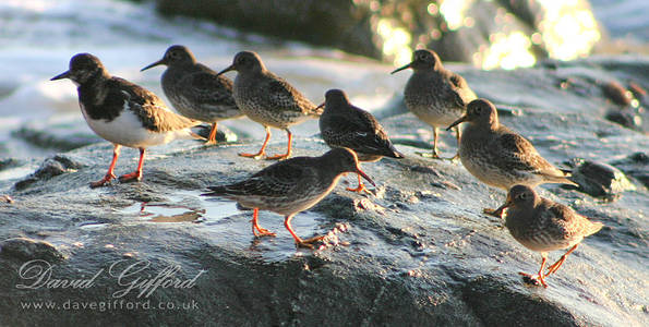 Sandpiper Group on Da Rocks