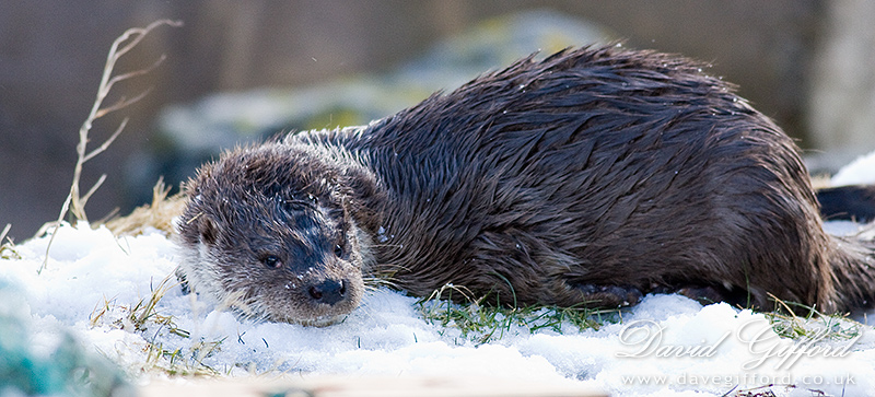 Otter Chilling Out