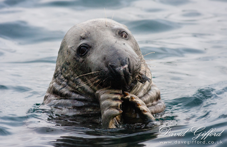 A Seal's Catch