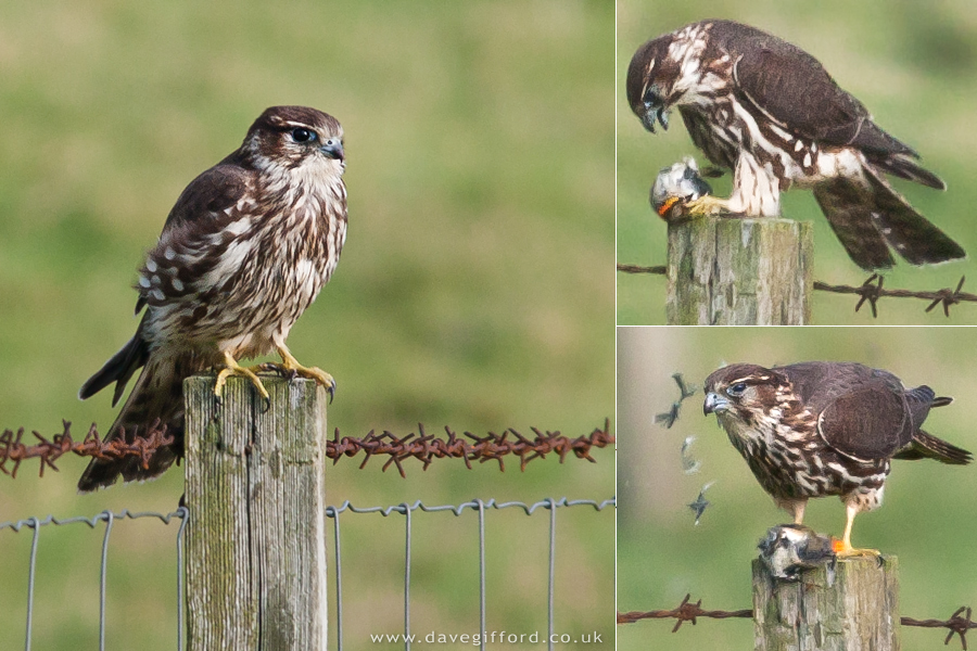The Rockingbirds - Gradually Learning
