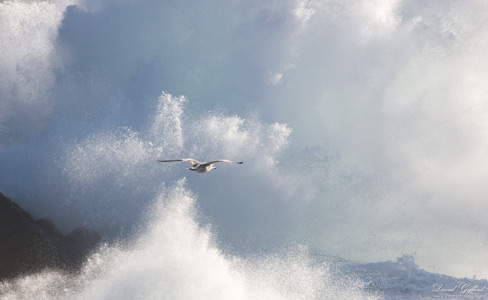 Soaring through the Storm